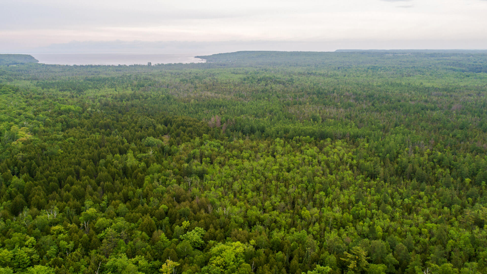 An aerial view of the Gibraltar Ephraim Swamp, whose purchase was made possible by Wisconsin's Knowles-Nelson Stewardship Program