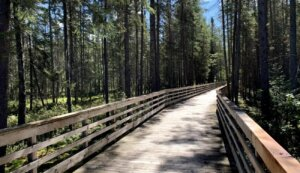 A boardwalk bike trail through the woods in Vilas County.