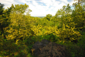 A forest along the Niagra Escarpment