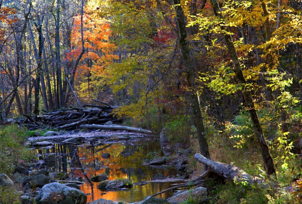 Fall foliage reflects in Otter Creek at Baxter's Hollow.