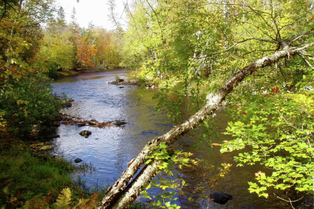 A creek flows through the Wild Rivers Legacy Forest, preservation of which was made possible by the Knowles-Nelson Stewardship Program.