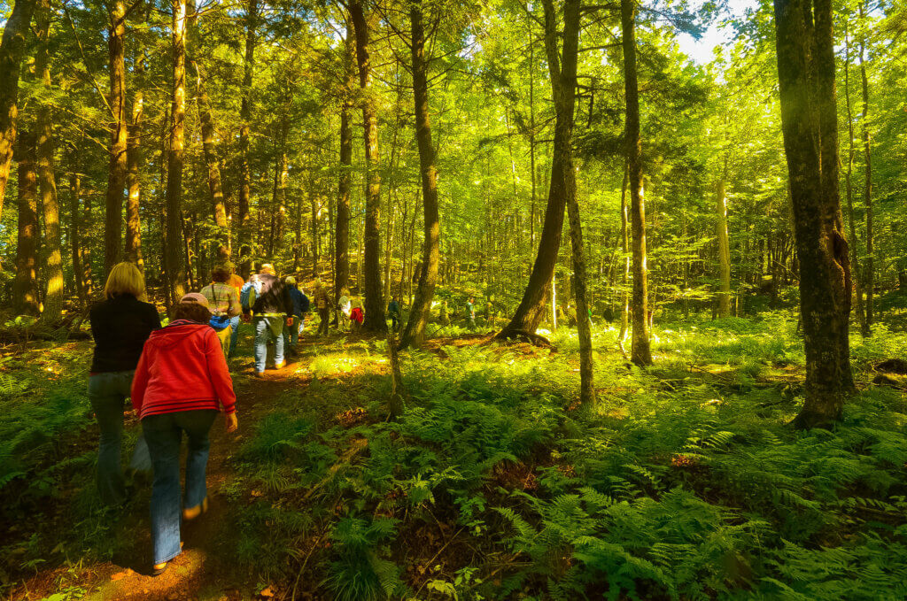 Forest in Vilas County, where the board recently passed a resolution in support of the Knowles-Nelson Stewardship Program