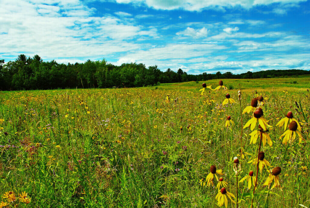Prairie at Standing Cedars Community Land Conservancy, a site protected using the Knowles-Nelson Stewardship Program.